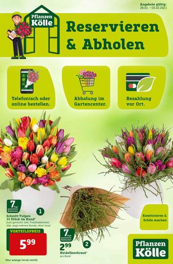 Pflanzen Kölle Prospekt (bis einschl. 03-02)