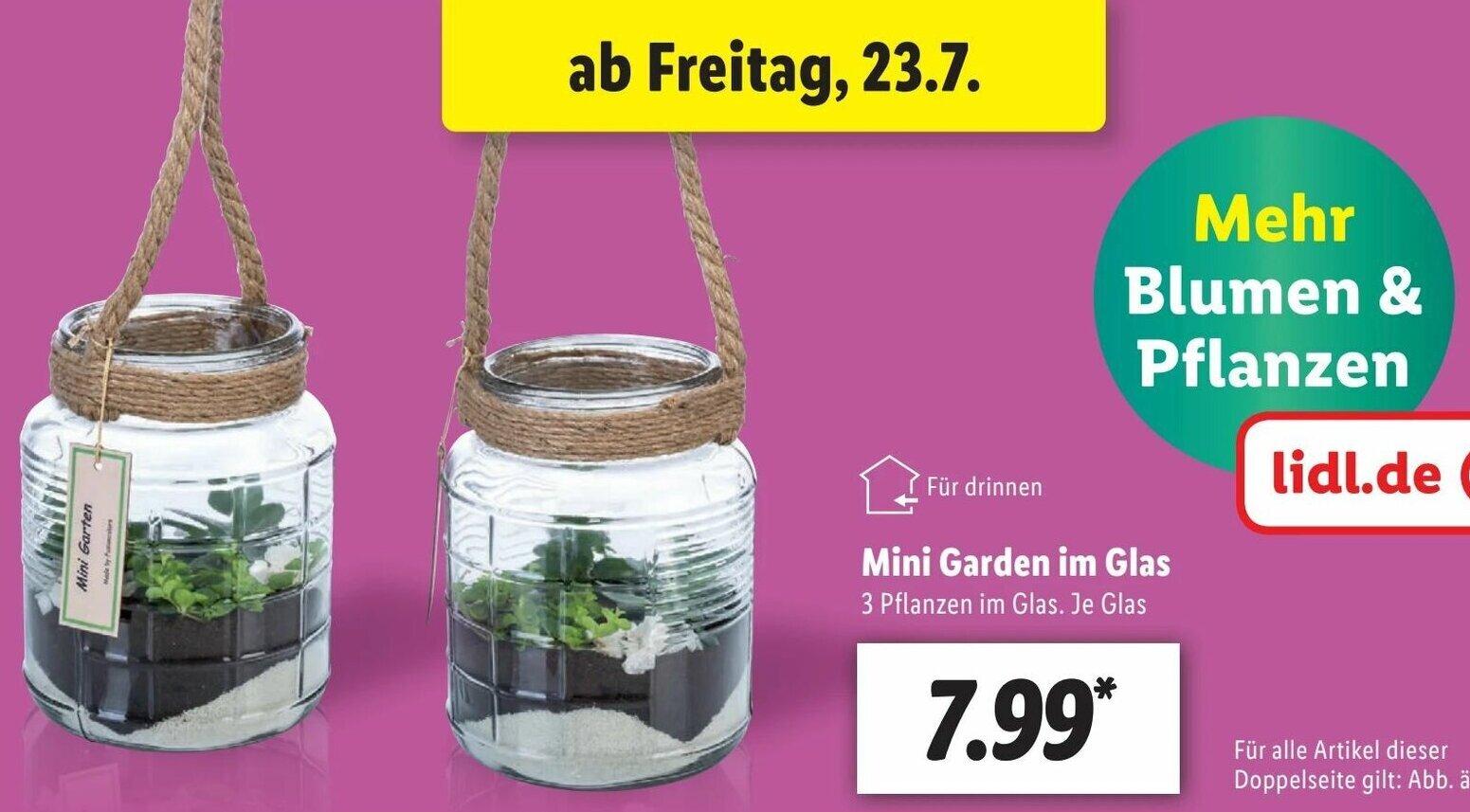 16 Am Schnellsten Mini Garden