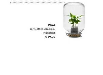 Plant Jar Coffea Arabica